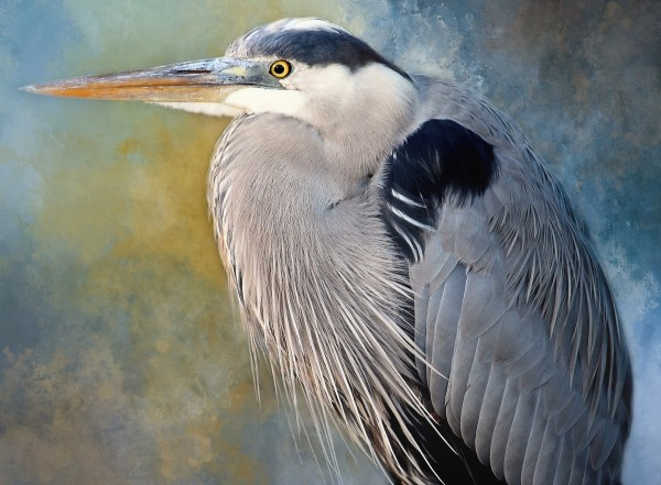 Big Blue Portrait by HH Photography of Florida