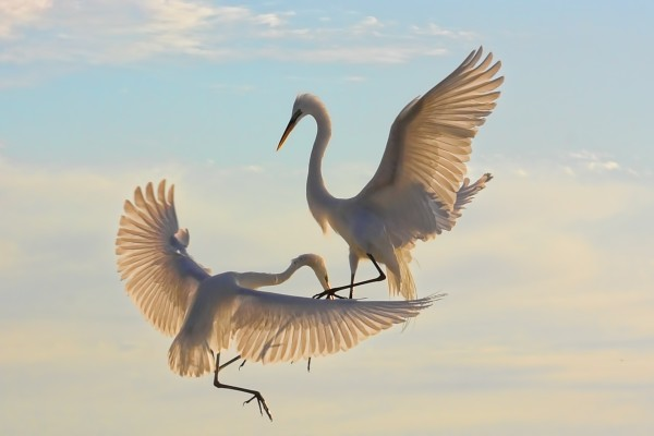 Air Dance  by HH Photography of Florida