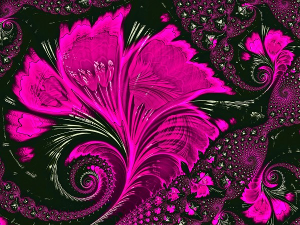 Fractal Flowers by HH Photography of Florida