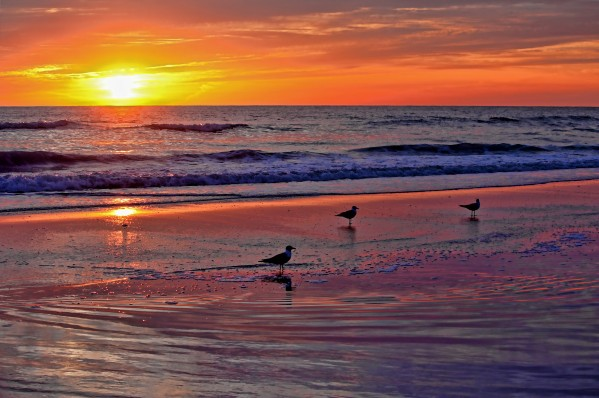 Three Seagulls On A Sunset Beach by HH Photography of Florida