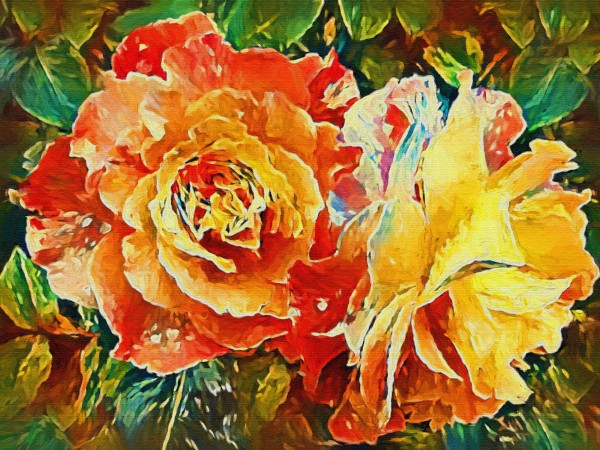 Two Garden Roses  by HH Photography of Florida