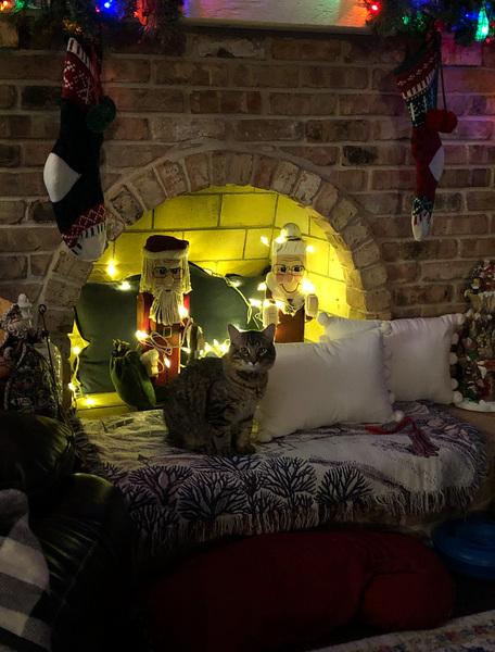 Christmas Cat Digital Download