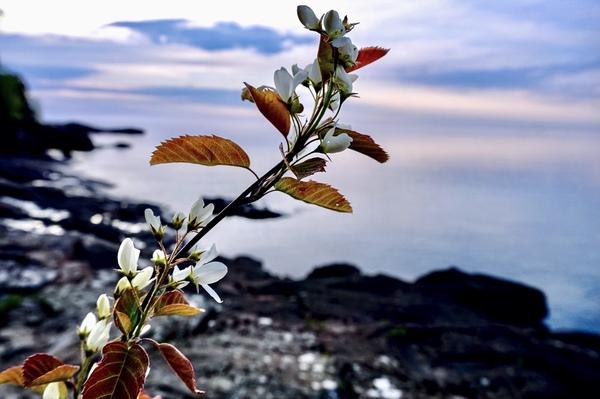 Flower on the Shoreline Digital Download