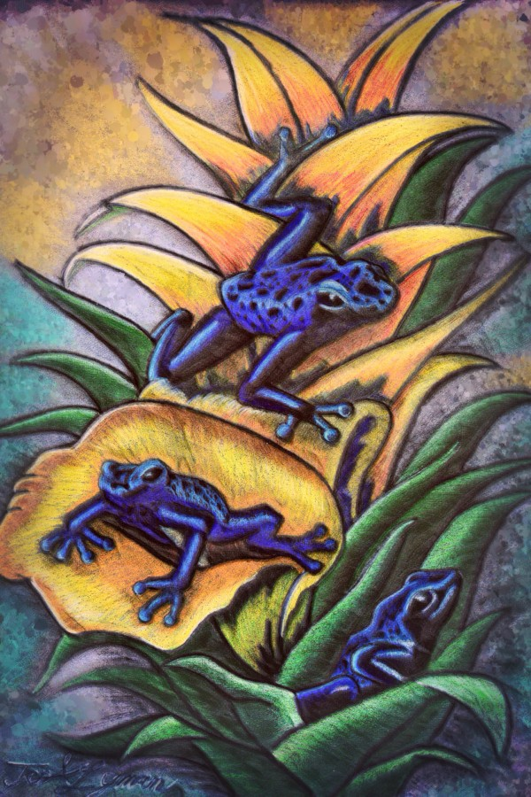 Artistic To The Frogs by Jeremy Lyman