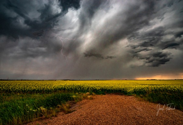 Canola Lightning   Hi Res   A3 by Joel Fabrick