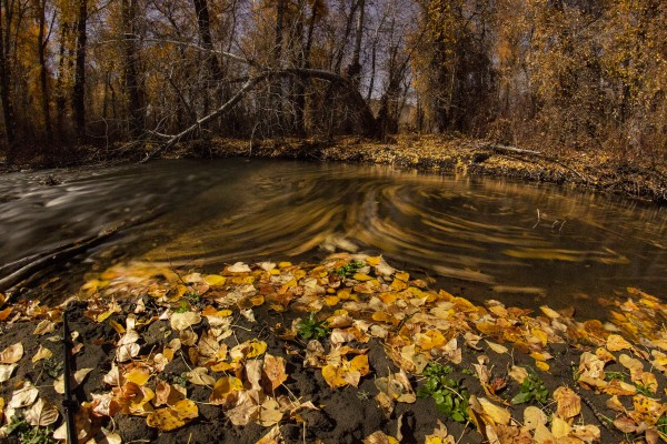 Fall Colors Swirling in the Big Wood Eddy in October by John Anderson