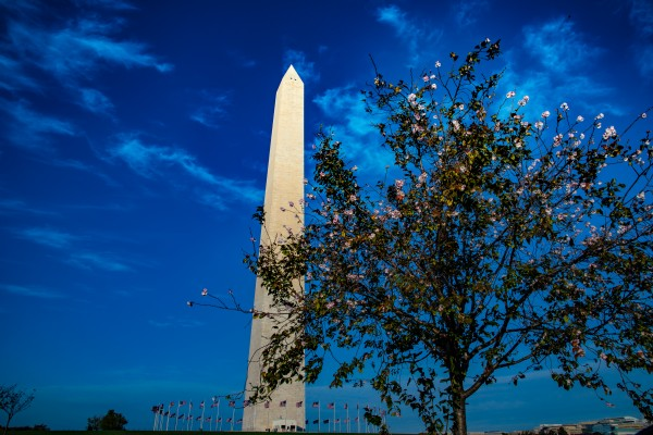 National Blossoms  by Elitephotos