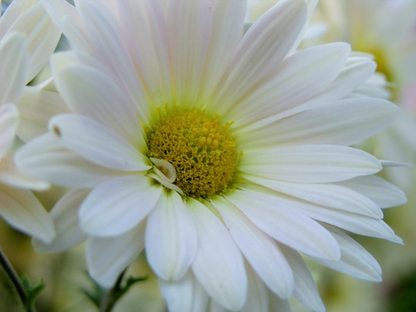 Floral Photography  by Katherine Lindsey Photography