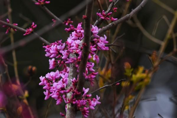 Pink Trees by LambySnaps
