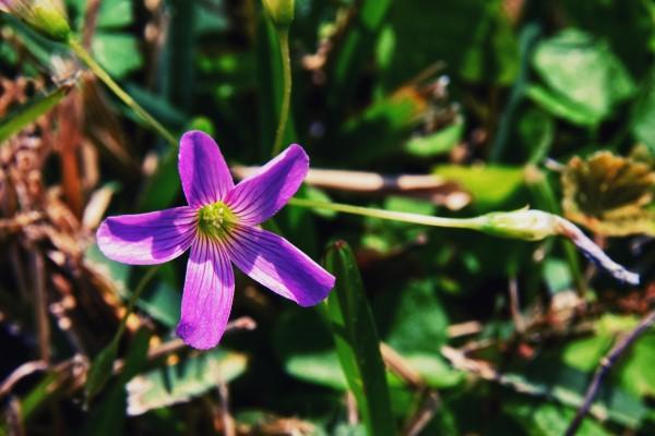 Flowers by LambySnaps