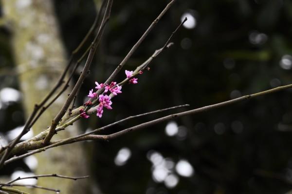 Pink Blossoms by LambySnaps