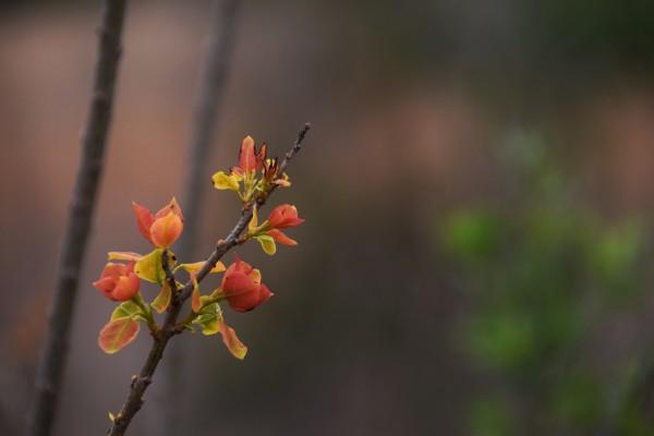 orange blossoms by LambySnaps