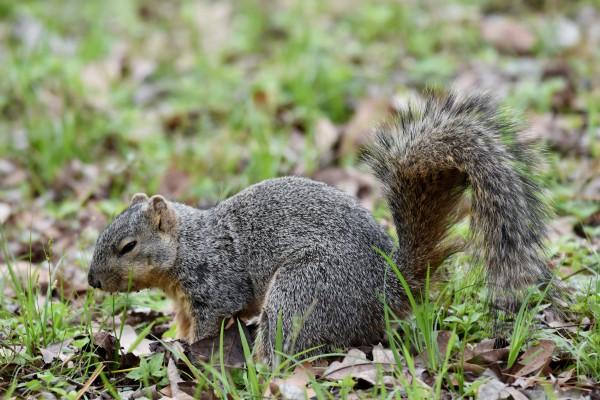 Squirrel by LambySnaps