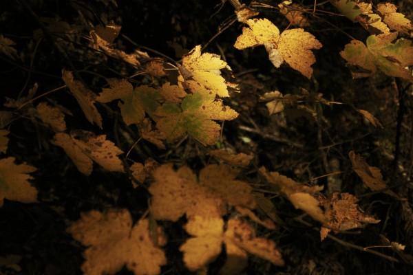 Remember autumn Canvas Print