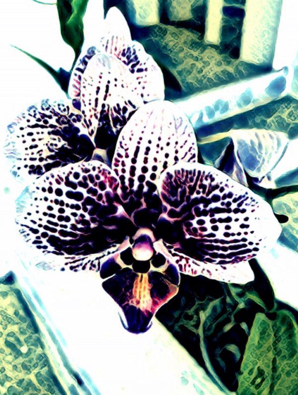 Orchid in Abstraction  by Mary Crook