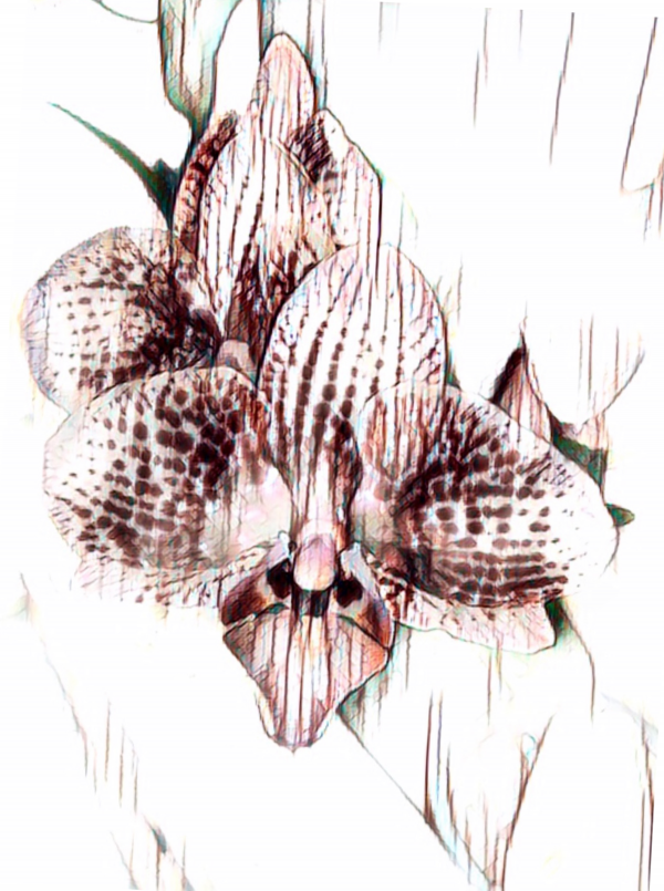 Scribbly Orchid by Mary Crook