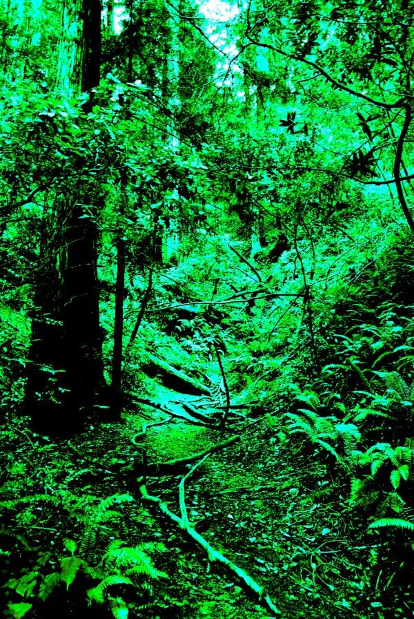 Forest Trails by Matthew Ulisse
