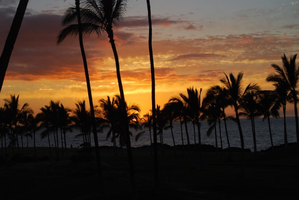 Burning Palms by Matthew Ulisse