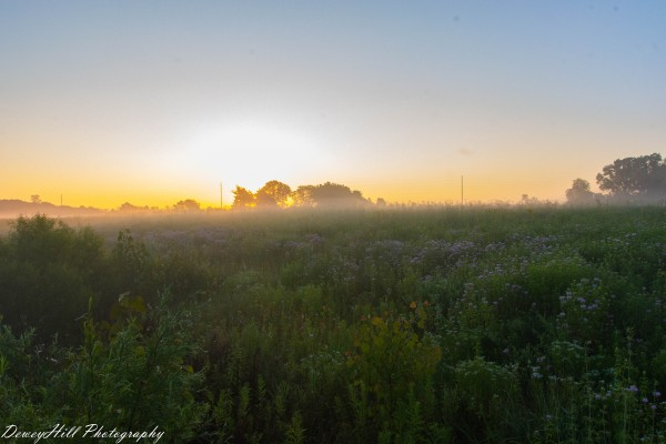 Springfield Bogg Early Sunrise by DeweyHill Photography