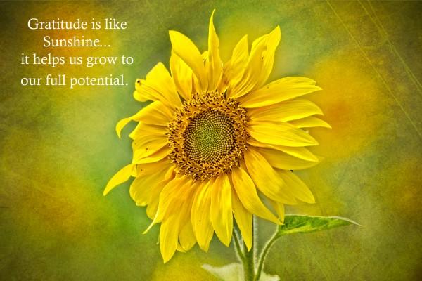 Gratitude is Like Sunshine Canvas Print