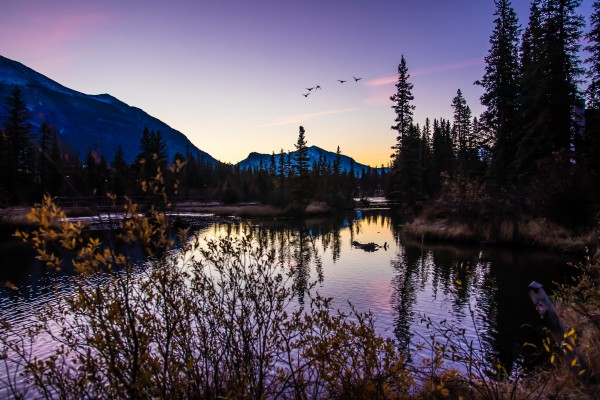 As Ducks Fly Policemans Creek Canmore by Mike Gould Photoscapes