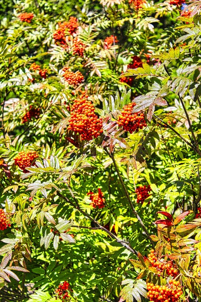 Berries by Adventure Photography