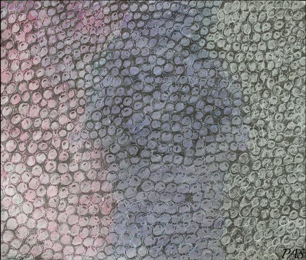Pebbles by Pallavi Sharma
