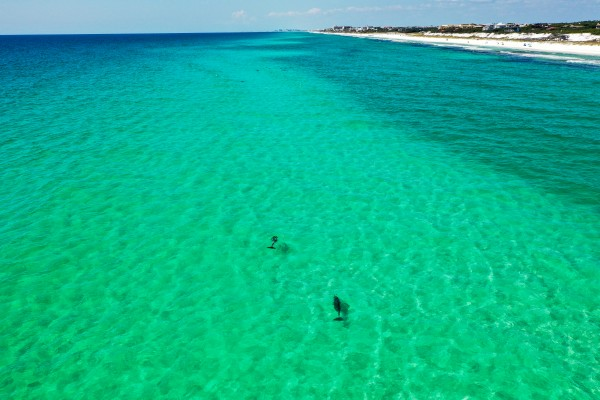 Dolphins Bar  by Destin30A Drone