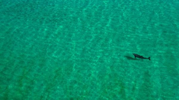 Solo Dolphin by Destin30A Drone