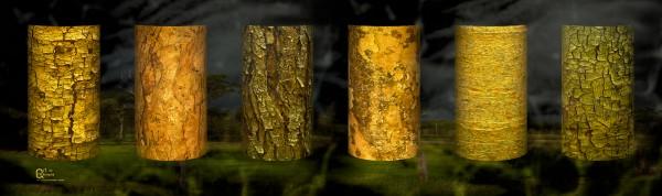 tree bark sentinels by Stephen James