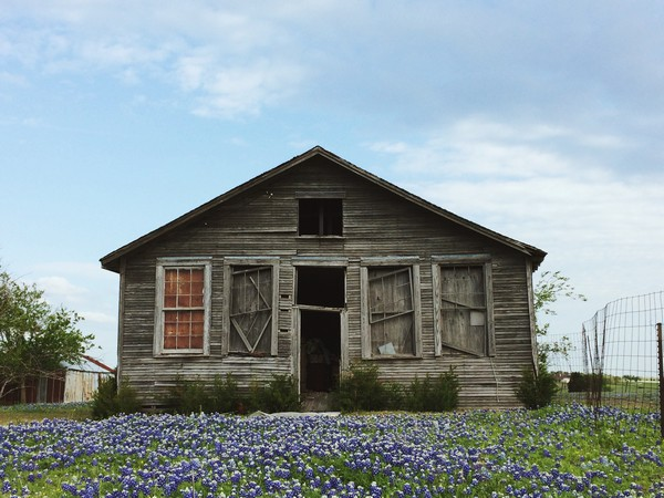Blue Bonnet Shack  Print