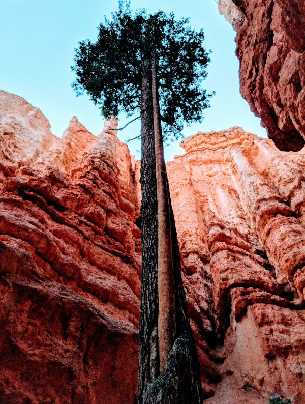 Bryce Canyon II by Broken Compass Life Photography