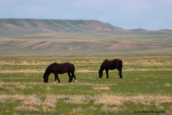 Wild Beauties by Susan Diann Photography