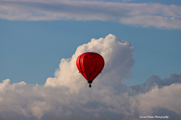 Dream High by Susan Diann Photography