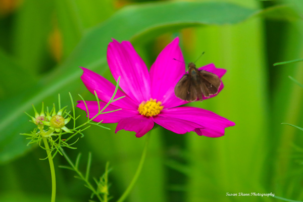 Pink Series 11 by Susan Diann Photography
