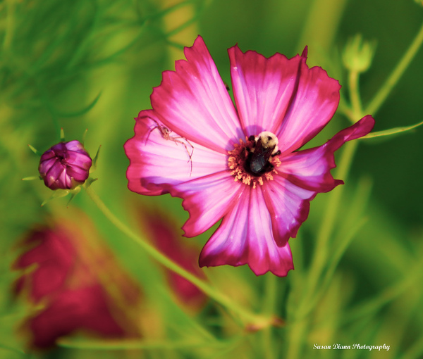 Pink Series 6 by Susan Diann Photography