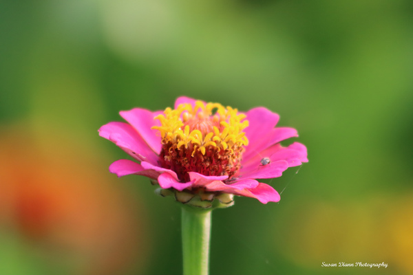 Pink Series 7 by Susan Diann Photography