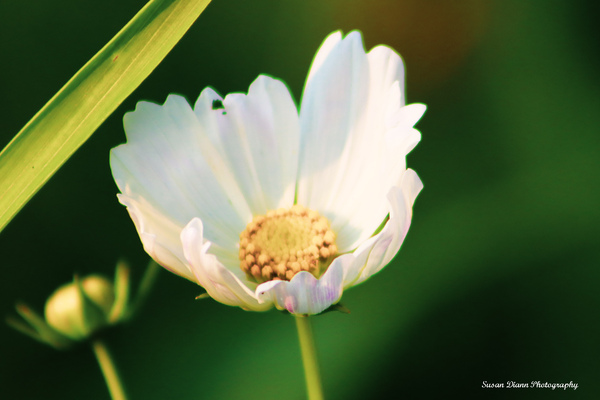 White Series 2 by Susan Diann Photography