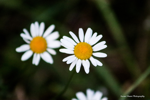 White Series 3 by Susan Diann Photography
