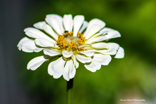 White Series 4 by Susan Diann Photography