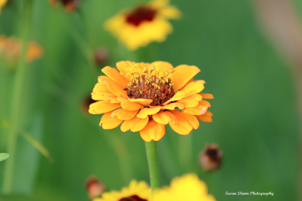Yellow Series by Susan Diann Photography