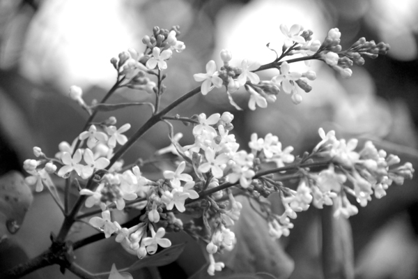 Simplicity by Photo Art Unlimited