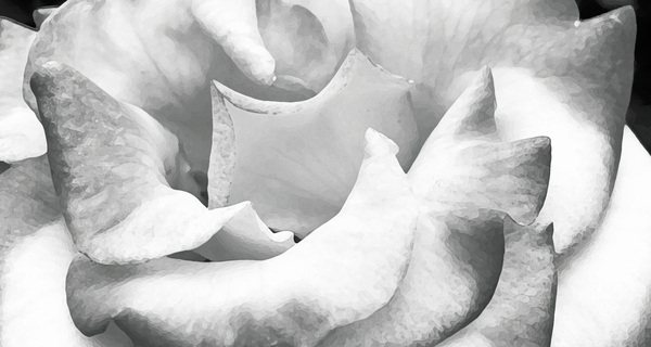 Petals by Photo Art Unlimited