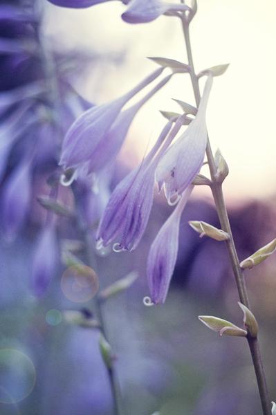 Purple Paradise by Photo Art Unlimited