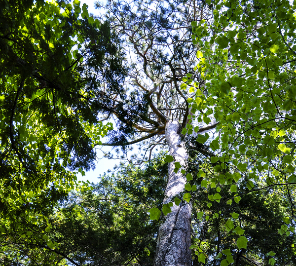 Skyview Canopy by Photo Art Unlimited