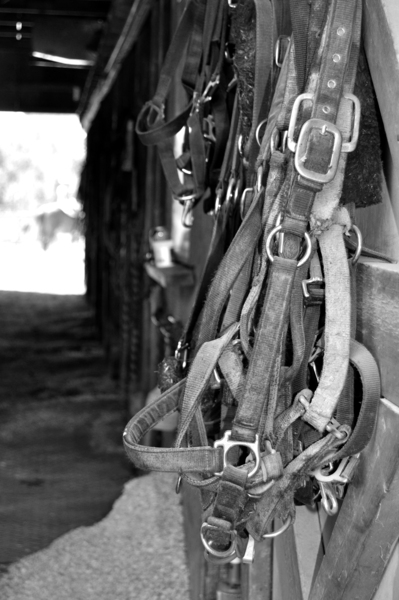 Tack by Photo Art Unlimited