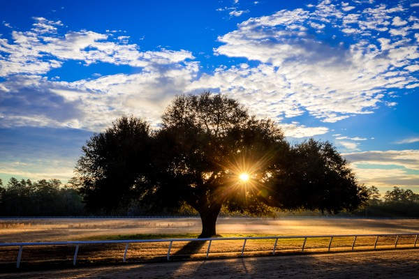 Blue Peters Tree Sunrise   Aiken 000 by @ThePhotourist