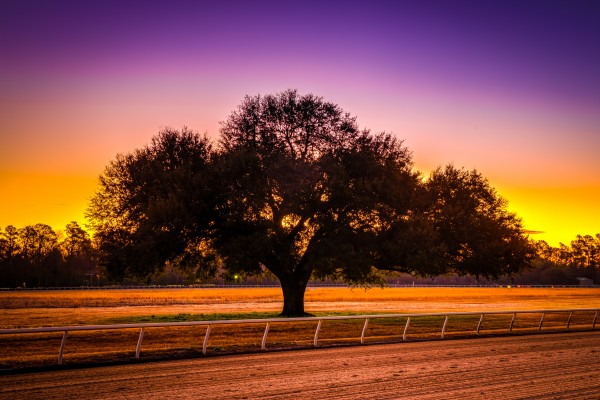 Blue Peters Tree Sunrise   Aiken 7810 by @ThePhotourist