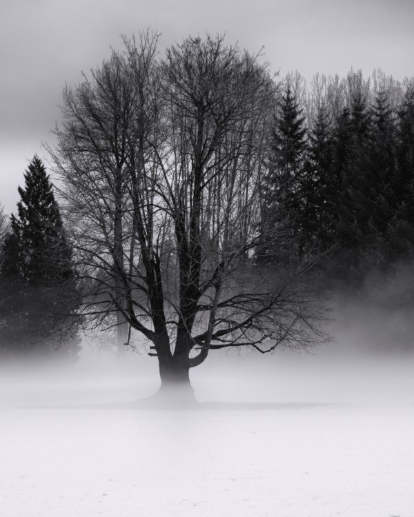 Winter fog by Violet Carroll