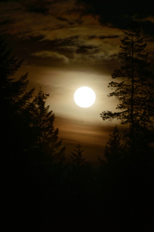 Moody moon by Violet Carroll